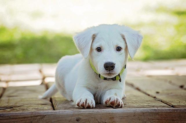 Pet Tracker Puppy